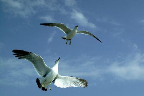 seagull sea sky