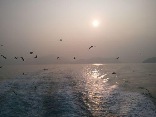 seagull times pleasure boat