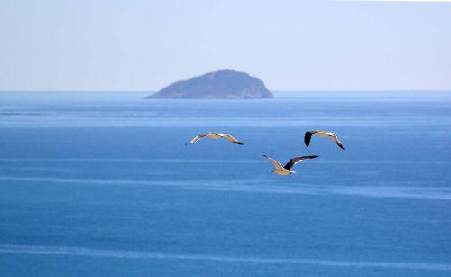 kajakas,ave,jūra