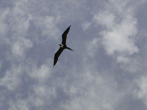 seagull profile sky