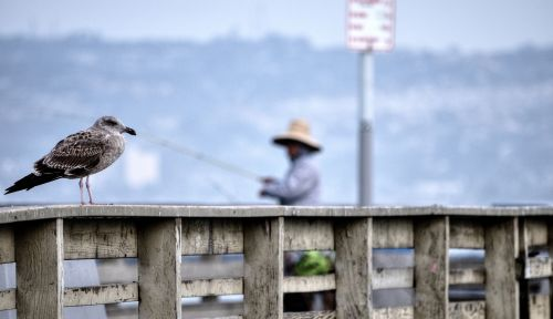 Seagull And Fisherman