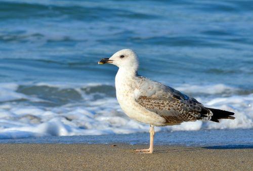 Seagull And The Sea