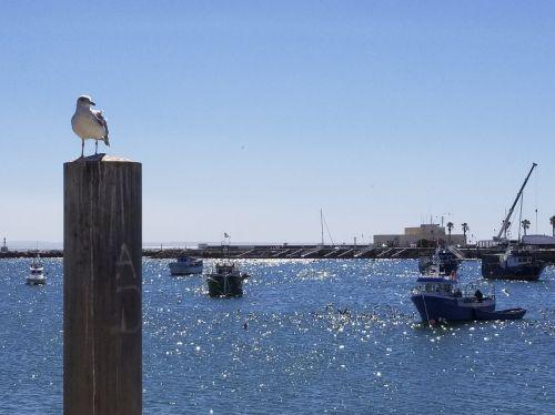 Seagull At Portugal Harbor