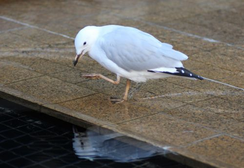 Seagull Inspection
