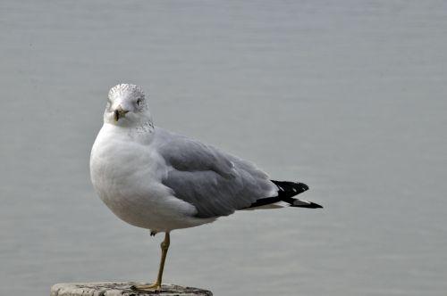Seagull On Post 2