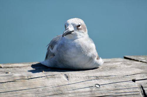 Seagull Resting On Fishing Pier