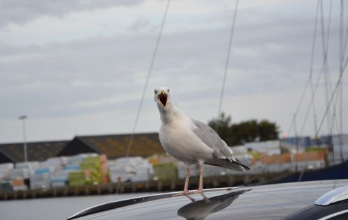 seagull sings song of the seagull port sea