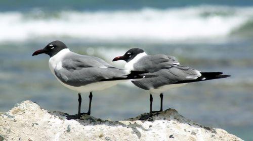 seagulls bird coastal