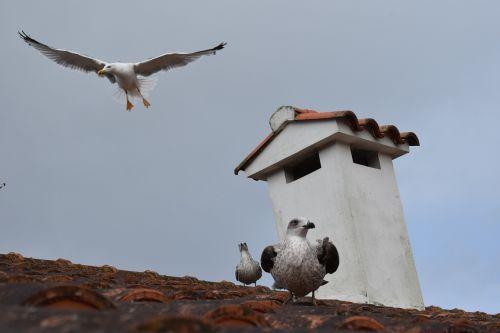 seagulls flying galicia