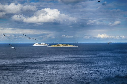 seagulls  sea  copenhagen