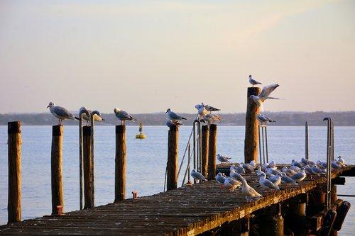 seagulls  rest  jetty