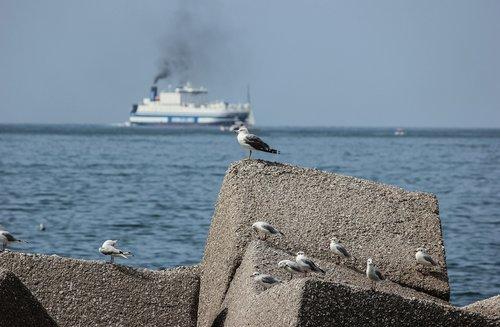 seagulls  sea  riva