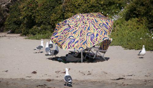 Seagulls And Beach Umbrella