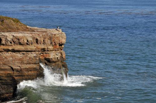 Seagulls On Ocean Ledge