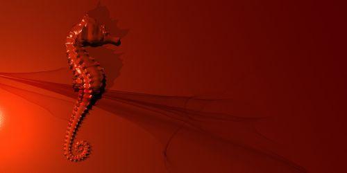 seahorse red sea
