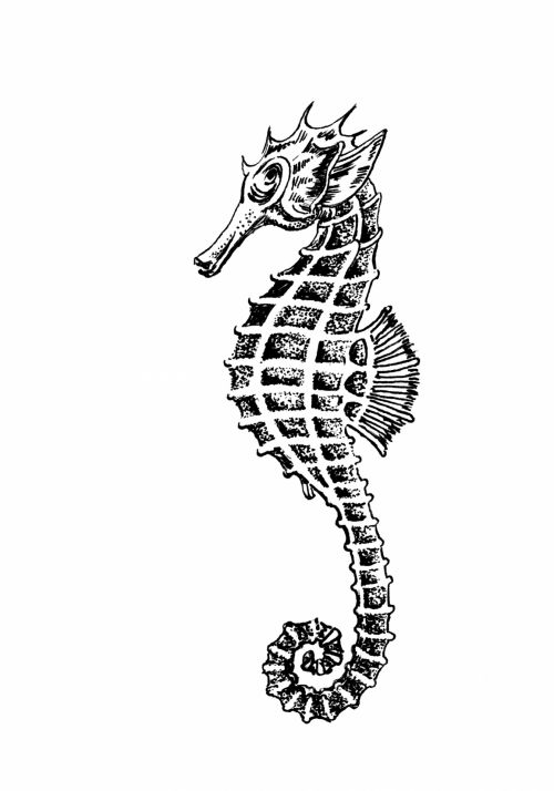 Seahorse Clipart Illustration