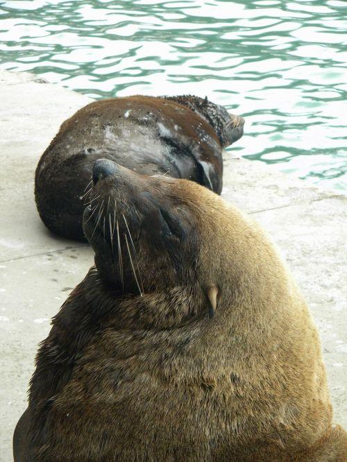 seal bold loiter