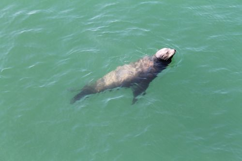seal ocean water