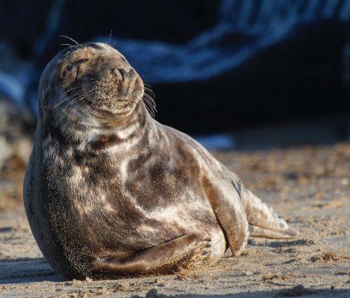 seal wildlife nature