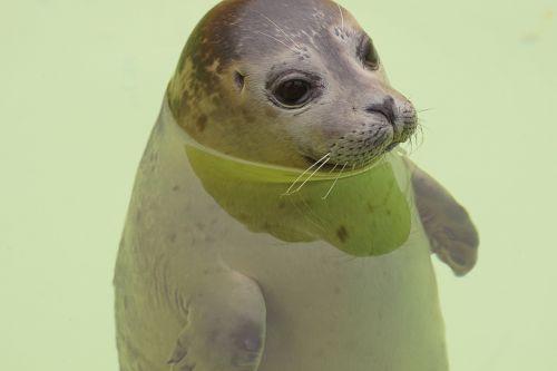 seal tegel meeresbewohner