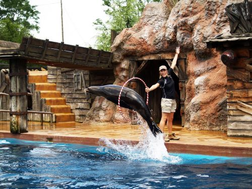 seal acrobatics water park