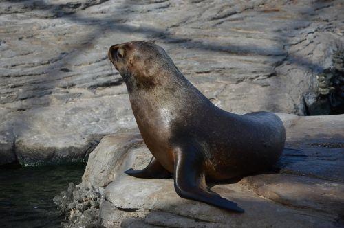 seal seal navy sea