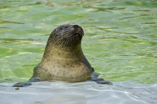seal aquarium water