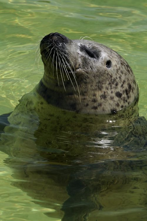 seal aquarium water