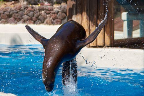 seal jump feat