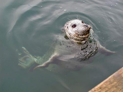 seal marine ocean