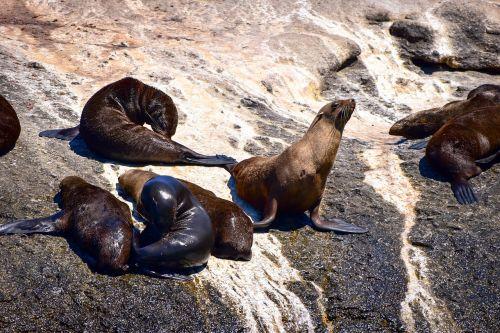 seal hout bay seal island