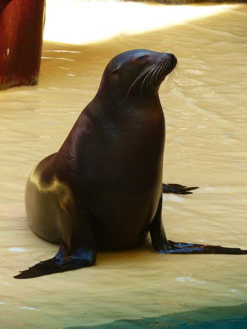 seal animal meeresbewohner