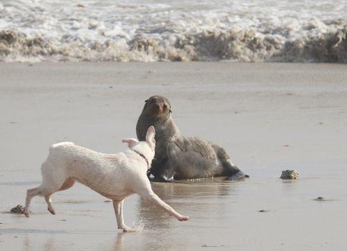 seal sea dog