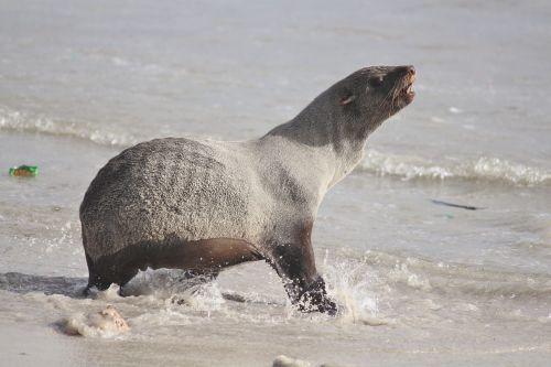 seal sea beach