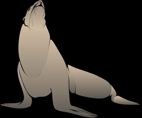 seal head raised