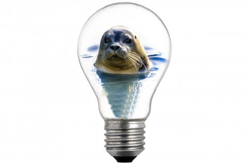 Seal In The Bulb