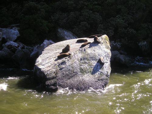 seals new zealand fiordland