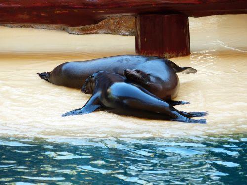 seals smooch play