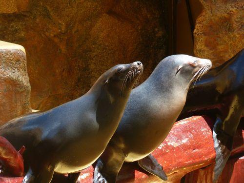 seals animals meeresbewohner