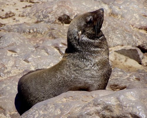 seals meeresbewohner animal