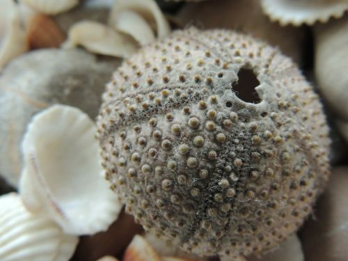 seashell holidays macro