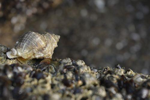 seashell seashells on the sea shore seashells