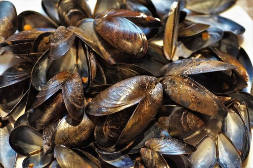 seashell  mussels  edible