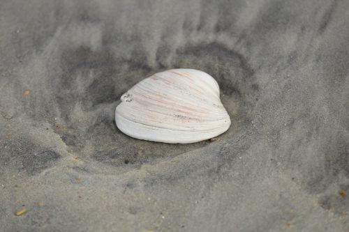 seashell sea shell sand