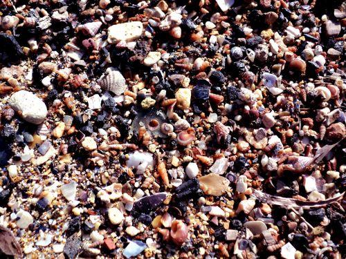 seashells beach sand