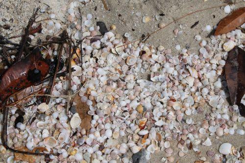 seashells sea sand