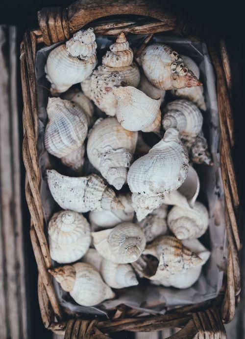 seashells basket shell