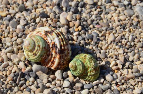 seashells two beach