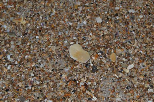 seashells sand small
