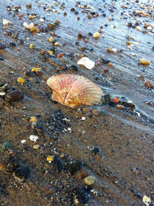 seashells portobello scotland